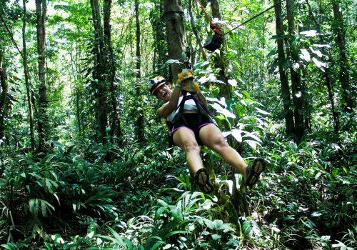 pachira lodge canopy