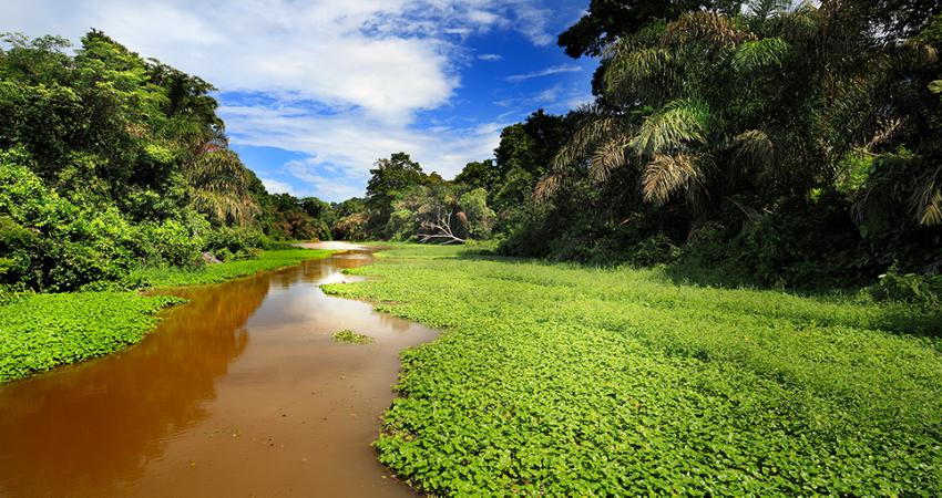 pachira_photos_0000_p.giocoso-0211-Costa-Rica-Tortuguero-002.jpg
